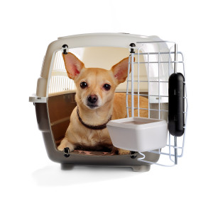 the container for transportation of animals with a small the container for transportation of animals with a small doggie